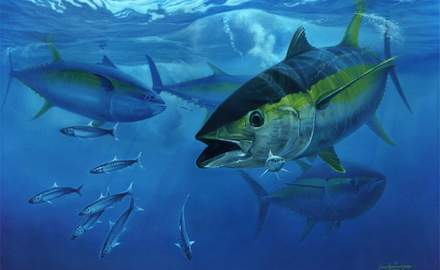 Wahoo take back seat with yellowfin arrival