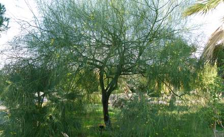 Plan your trees in low-maintenance garden