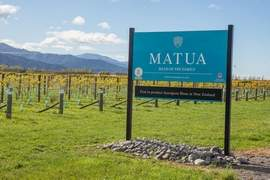 New Zealand wine industry growing rapidly